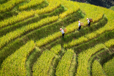 Guilin area, Longji Terraced Rice Fields. ©2015 Deborah Gray Mitchell