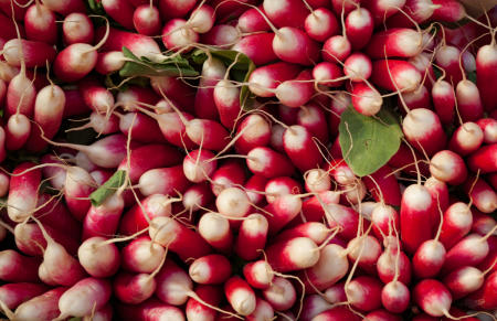 Radishes, St. Raphael, France, 2005